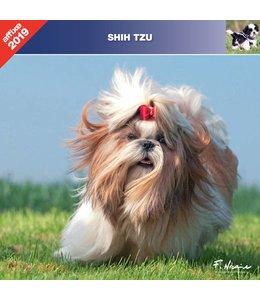 Affixe Editions Shih Tzu Kalender 2019
