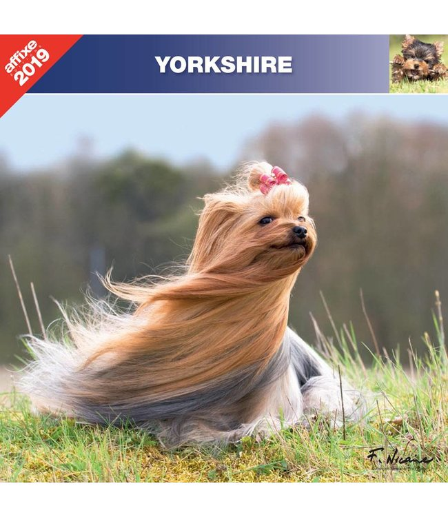Affixe Editions Yorkshire Terrier Kalender 2019
