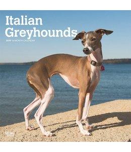 Browntrout Italian Greyhound Kalender 2019