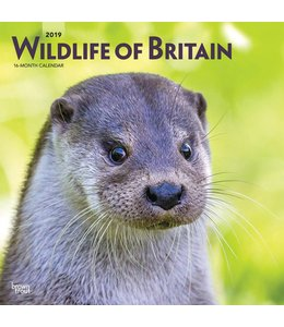 Browntrout Wildlife of Britain Kalender 2019