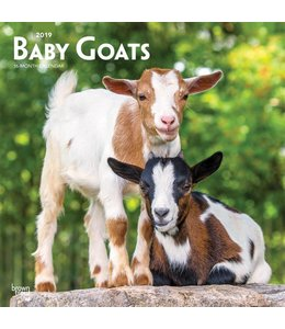 Browntrout Baby Goats Kalender 2019