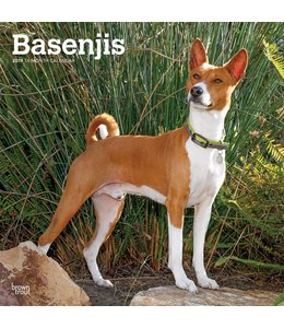 Browntrout Basenji Kalender 2019