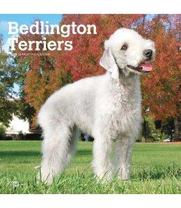 Browntrout Bedlington Terrier Kalender 2019