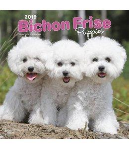 Browntrout Bichon Frise Kalender Puppies 2019