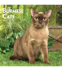 Browntrout Burmees Kalender 2019