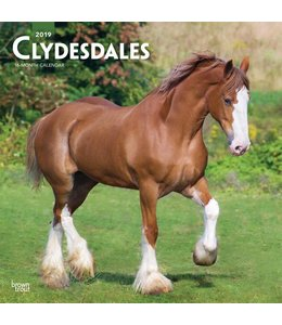 Browntrout Clydesdales Kalender 2019