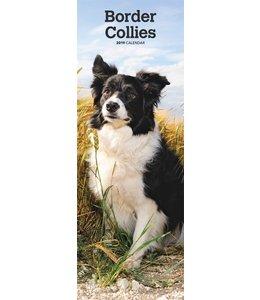 Browntrout Border Collie Kalender Slimline 2019