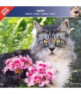 Affixe Editions Katten Kalender 2019