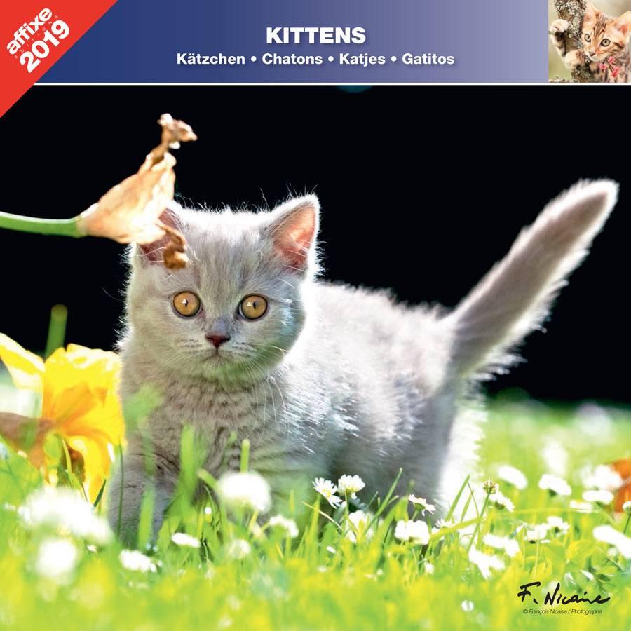 Kittens Kalender 2019