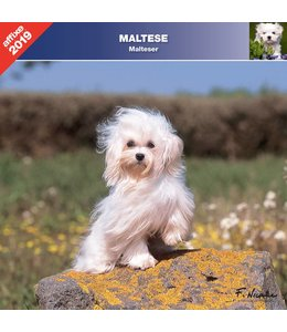 Affixe Editions Maltezer Kalender 2019