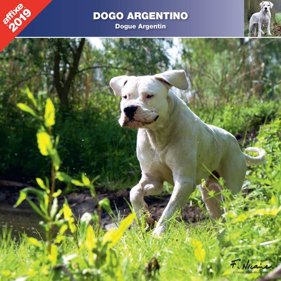 Argentijnse Dog Kalender 2019