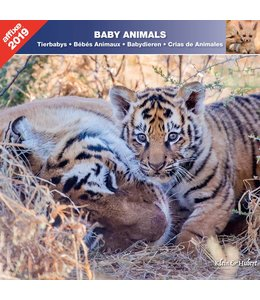 Affixe Editions Baby Animals Kalender 2019