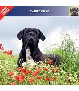 Affixe Editions Cane Corso Kalender 2019