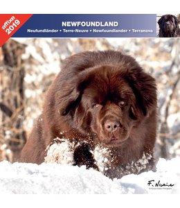 Affixe Editions Newfoundlander Kalender 2019