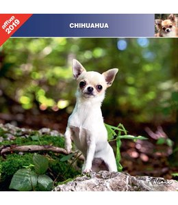 Affixe Editions Chihuahua Kalender 2019