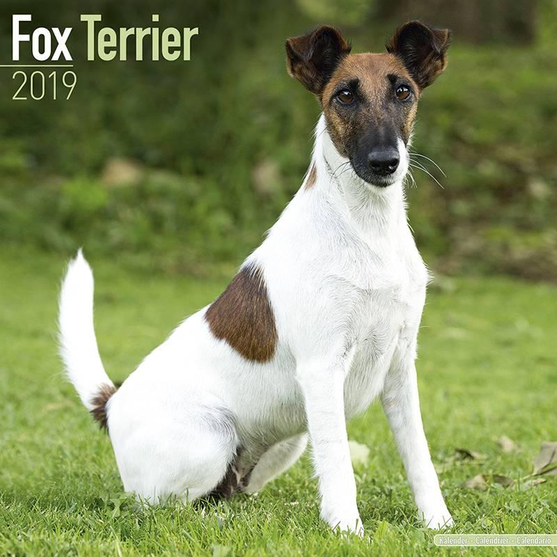 Fox Terrier Kalender 2019 Avonside