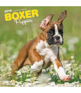 Browntrout Boxer Puppies Kalender 2019