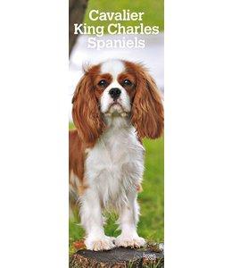 Browntrout Cavalier King Charles Spaniel Kalender 2019 Slimline