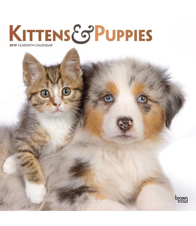 Browntrout Kittens en Puppies Kalender 2019