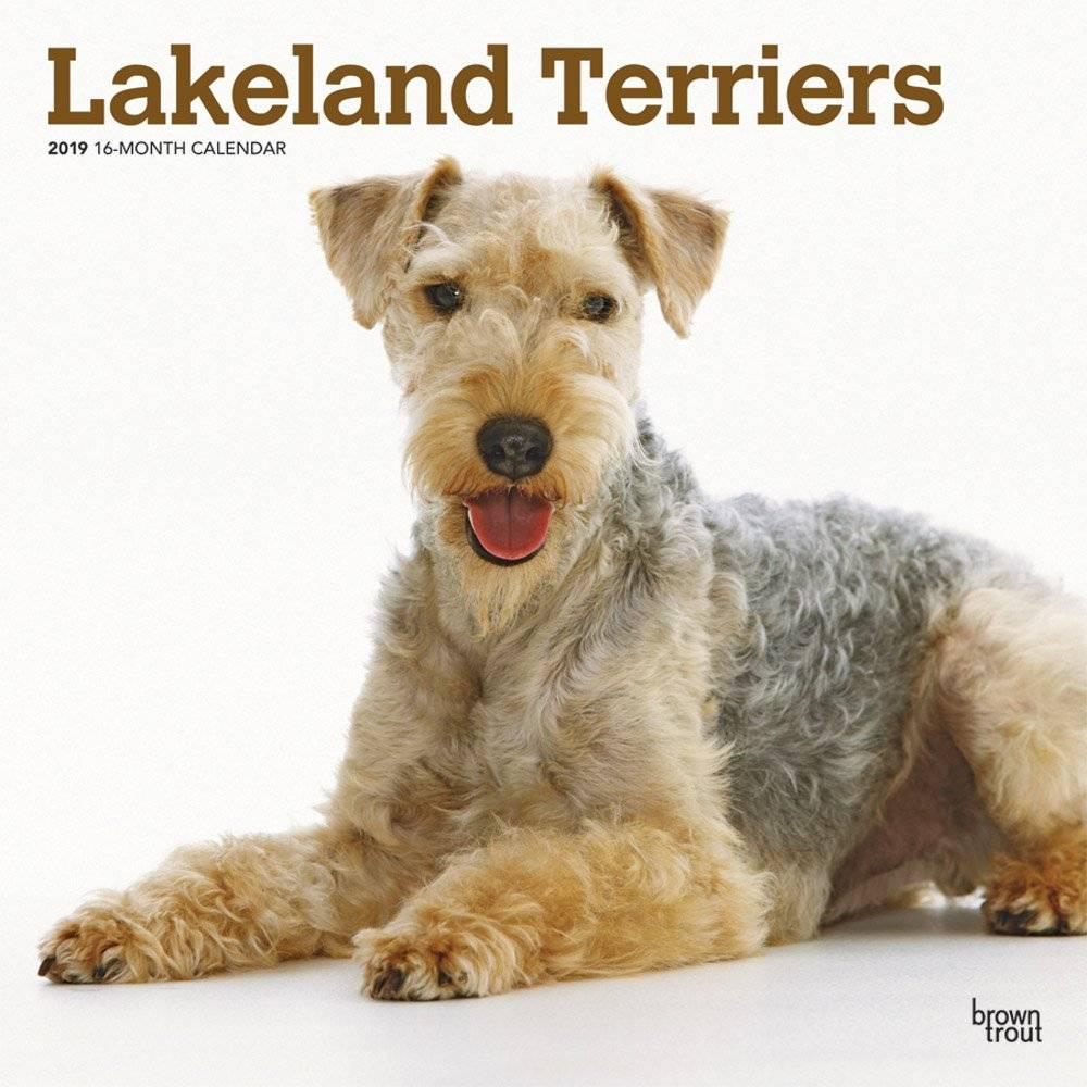 Lakeland Terrier Kalender 2019