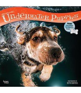 Browntrout Underwater Puppies Kalender 2019