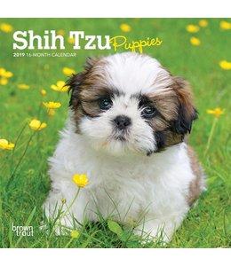 Browntrout Shih Tzu Puppies Kalender 2019
