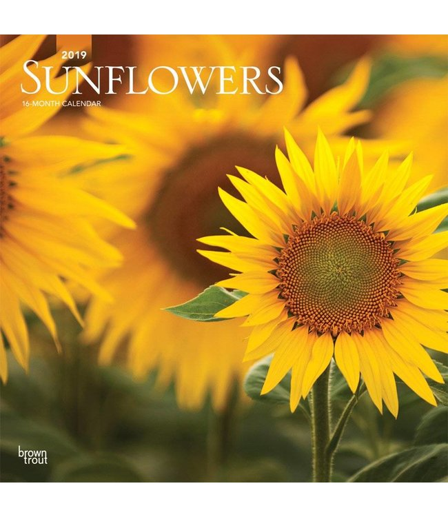 Browntrout Sunflowers Kalender 2019