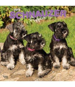 Browntrout Schnauzer Puppies  Kalender 2019