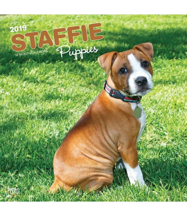 Browntrout Staffordshire Bull Terrier Puppies Kalender 2019