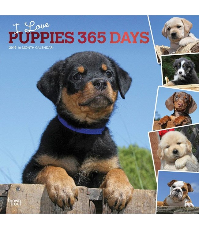 Browntrout I Love Puppies 365 Days Kalender 2019