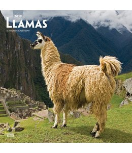 Browntrout Llamas Kalender 2019