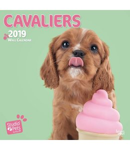 Browntrout Cavalier King Charles Spaniel Kalender 2019