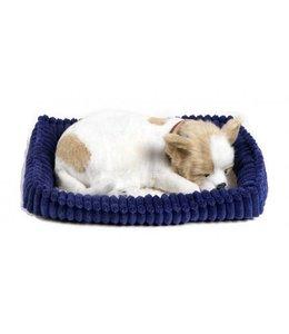 Perfect Petzzz Chihuahua Perfect Petzzz