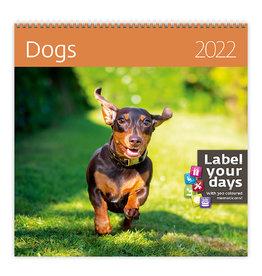 Helma CA02-22 Calendar 30 x 30 cm Dogs