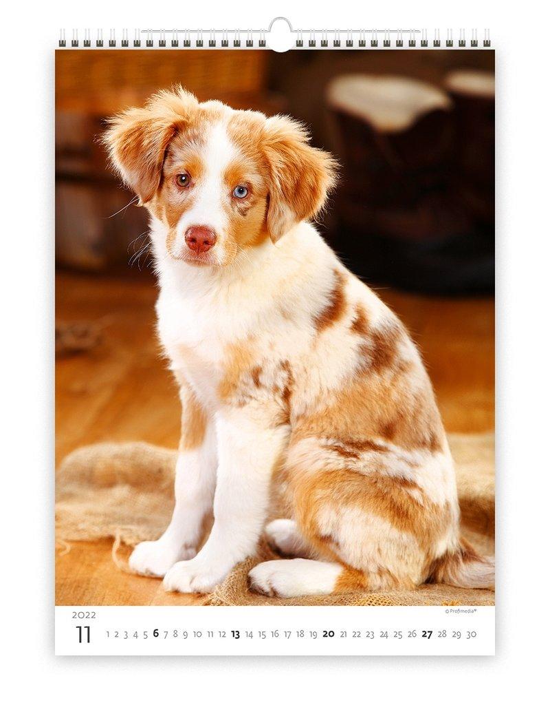 Helma C171-22 Kalpa Wall Calendar 2022 Puppies Calendar 24 x 33 cm