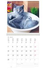 Helma Kalpa kalender 30 x 30 cm Katten