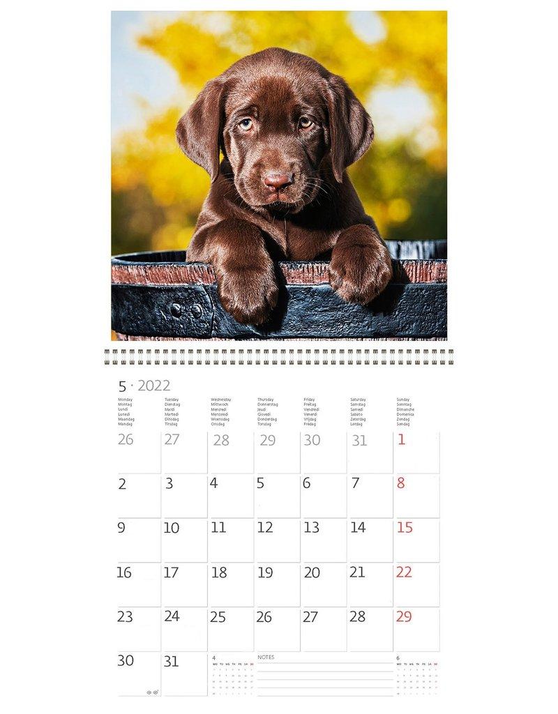 Helma CA02-22 Kalender 30 x 30 cm Honden