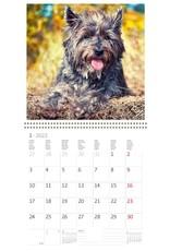 Helma CA02-22 Kalpa Calendar 30 x 30 cm Dogs