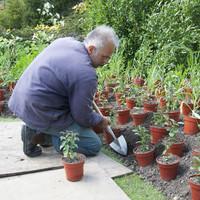 Sneeboer Plantschopje