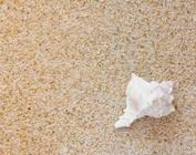 Zand, Ophoogzand en Schelpen