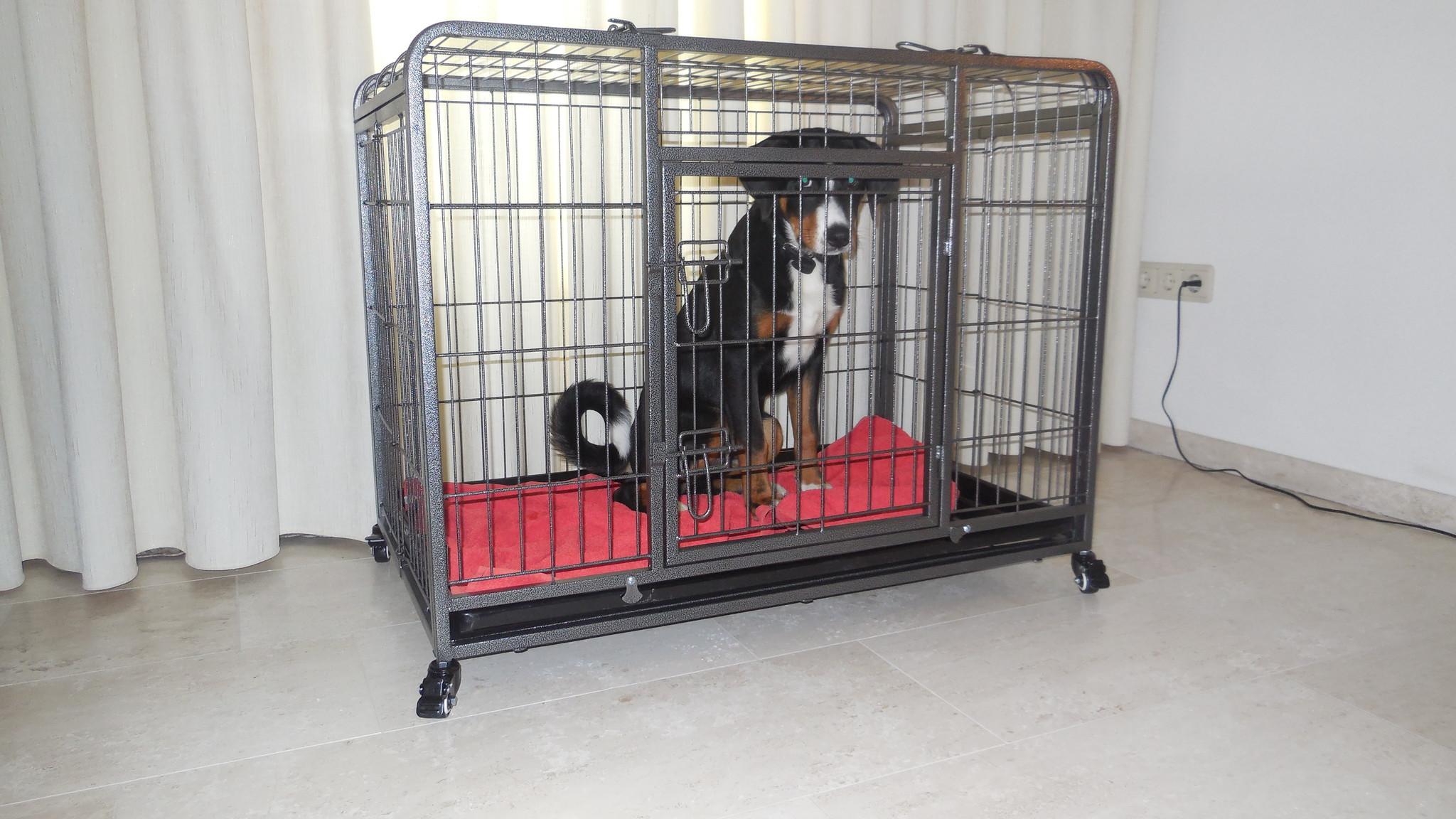 Welke maat hondenbench ben ik nodig voor mijn hond?