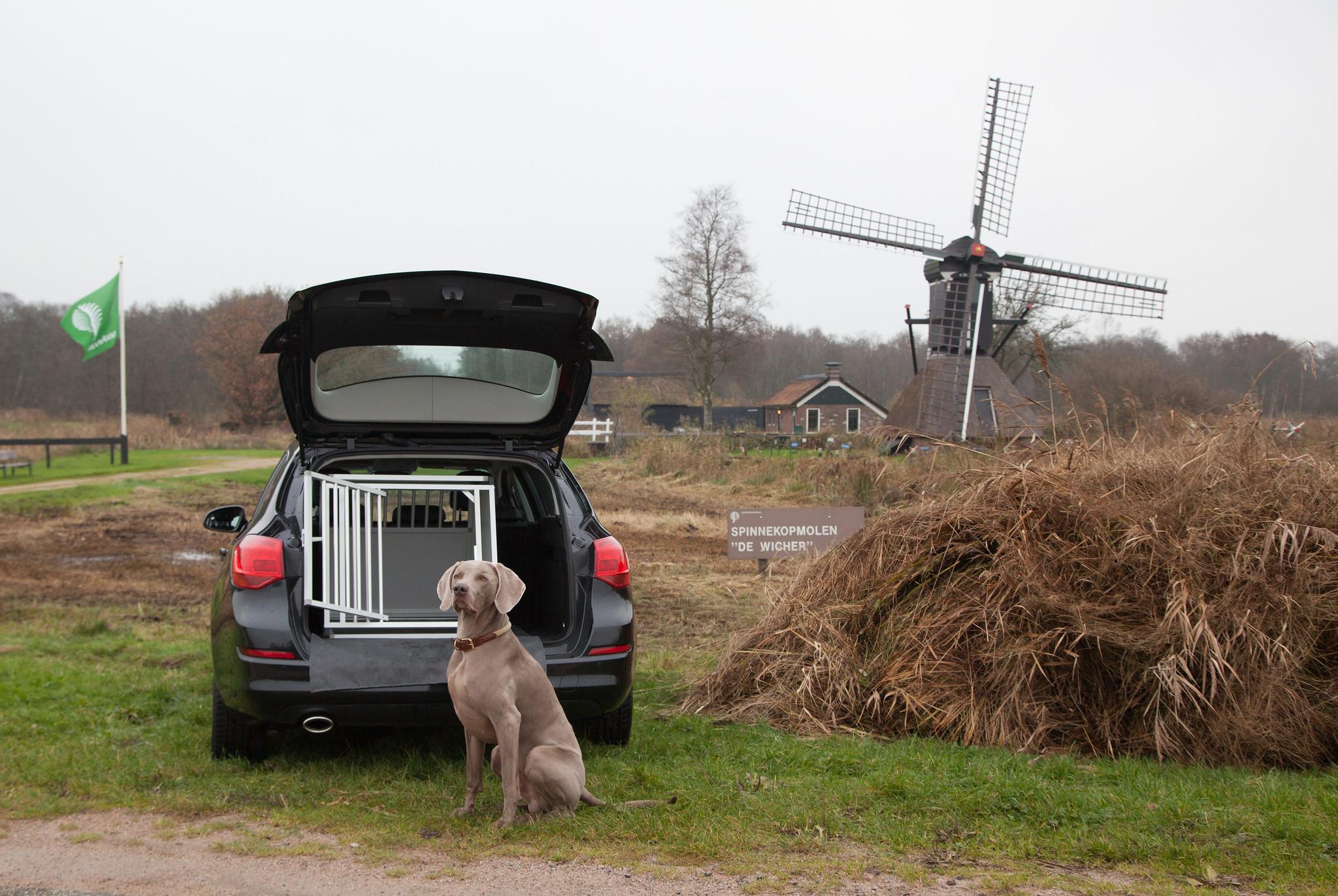 Hoe kan ik mijn hond het veilgst vervoeren