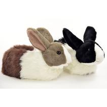 dieren pantoffel konijn( Eind Oktober 2021)