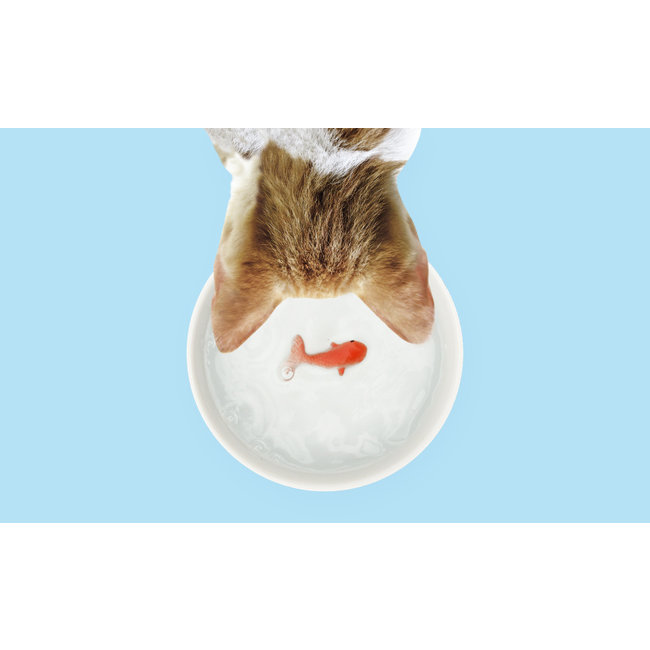 Suck UK Water Bowl for Cat 'Fish'