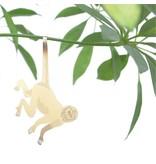 Plant Animal Monkey