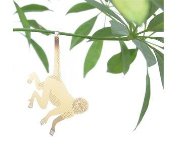 Plant Diertje 'Aap'