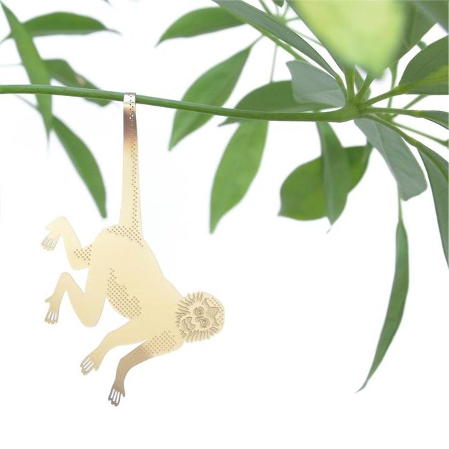 Pflanze Tier Affe