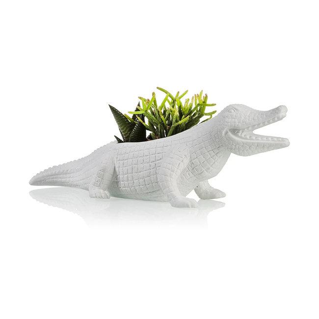 Bitten Blumentopf Krokodil