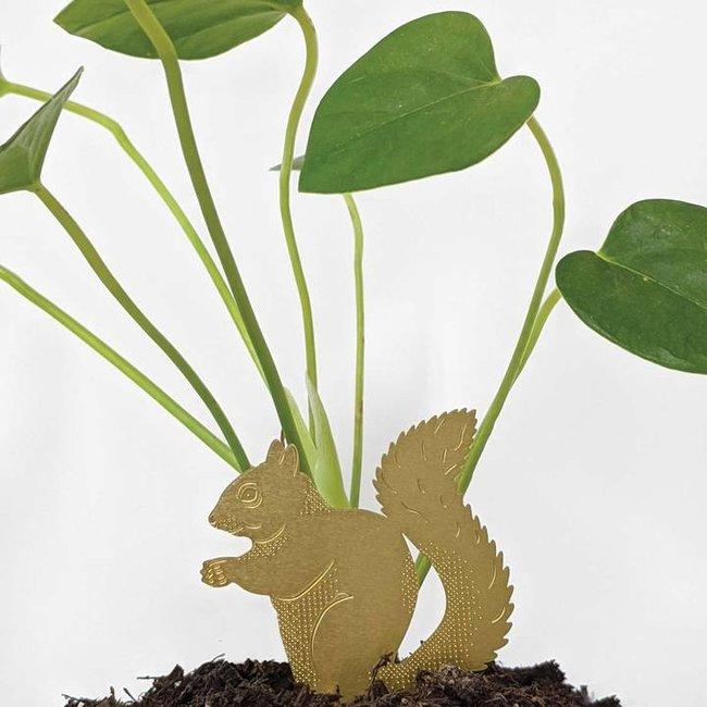 Pflanze Tier Eichhörnchen - Another Studio