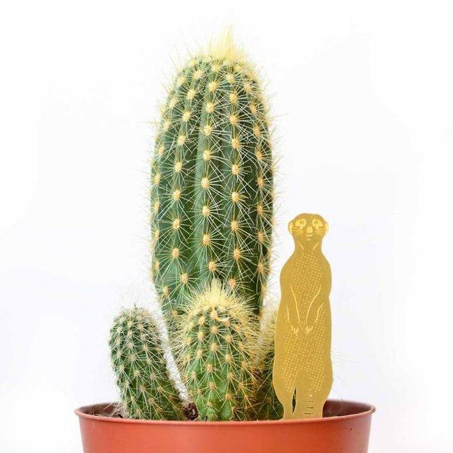 Another Studio - Animal Plante Suricate